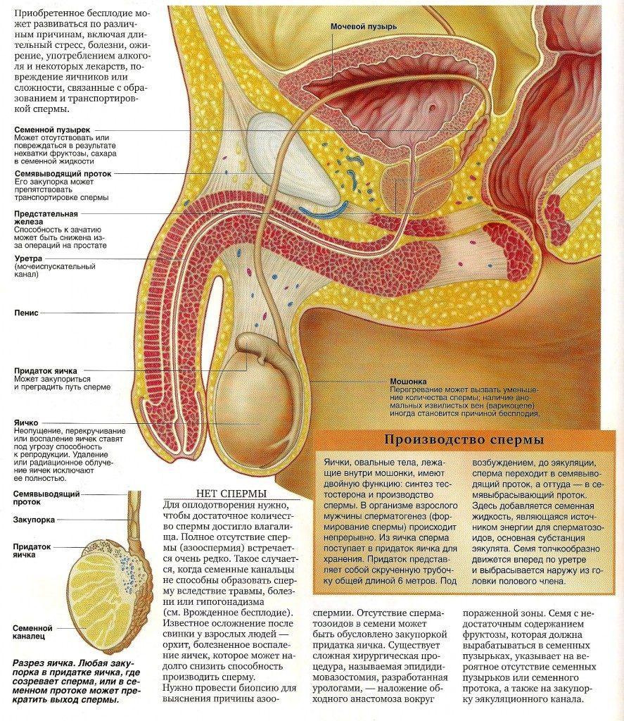 Как сперма влияет удален